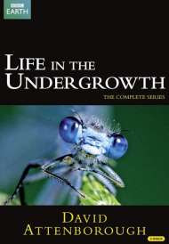 Life in the Undergrowth (2005)